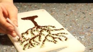 chocolate-tree_4